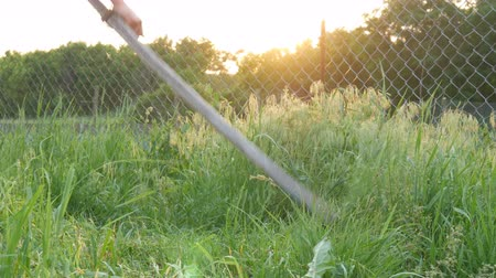 hay mowing : Strong man farmer mows a green grass with hand scythe on the background of the setting sun. Hay harvest