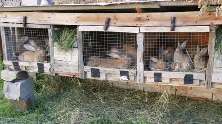 fofinho : Many different rabbits in cage on the home farm