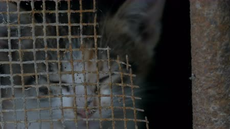 zbloudilý : Homeless tired hungry abandoned flea cat looks through the bars of basement into the camera Dostupné videozáznamy