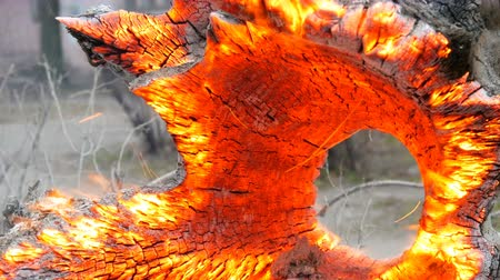 estrutura : Interesting unusual smoldering and burning old tree stump, glowing from wind