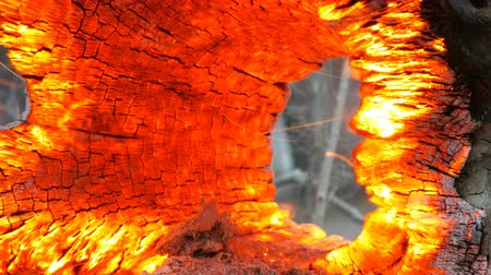 живая природа : Interesting unusual smoldering and burning old tree stump, glowing from wind