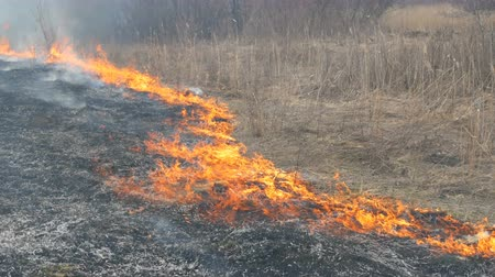 inflammable : Spontaneous fire in the nature, burning grass, forest, trees, bushes. Huge area of burnt land Stock Footage