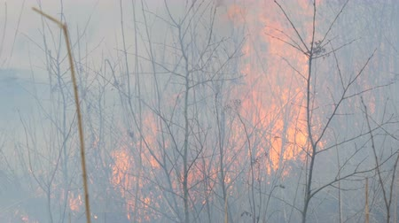 gyúlékony : Spontaneous fire in the nature, burning grass, forest, trees, bushes. Huge area of burnt land Stock mozgókép