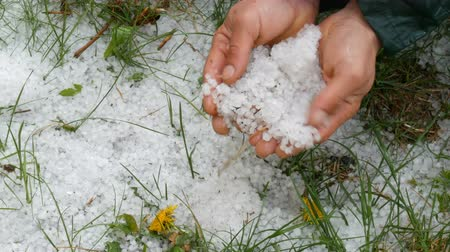 bezelye : Natural disasters. Early spring snowy ice hail on green grass. A man holds a cold hail in hands Stok Video