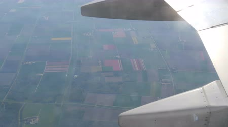 folt : The plane flies over the beautiful fields of multicolored tulips in Holland, the view from porthole. Airplane wing in flight over the tulip fields of the Netherlands