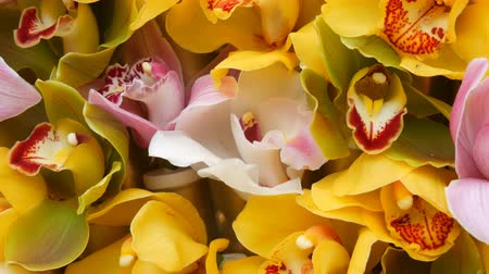 orchideeen : Colorful yellow orchid flowers on exhibition in greenhouse Stockvideo