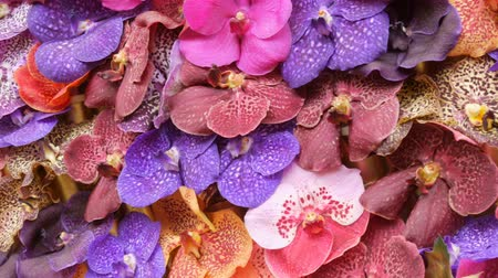 тычинка : Colorful orchid flowers on exhibition in greenhouse Стоковые видеозаписи
