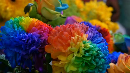 se movendo para cima : Beautiful unusual interesting multi-colored rainbow peonies, daisies, roses. Selection of flowers, unusual flower color Stock Footage