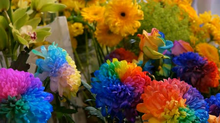 margaréta : Beautiful unusual interesting multi-colored rainbow peonies, daisies, roses. Selection of flowers, unusual flower color Stock mozgókép