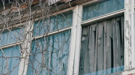 разорвал : Exterior of old abandoned window with dry branches and ragged curtains Стоковые видеозаписи