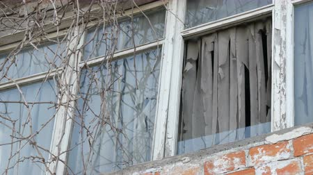 slit : Abandoned old window with tree branches and ragged curtains Stock Footage