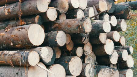 silvicultura : Industrial truck with trailer transports freshly sawn logs. A Tree trunks neatly in row. Transportation of timber on truck on the mountain road. Vídeos
