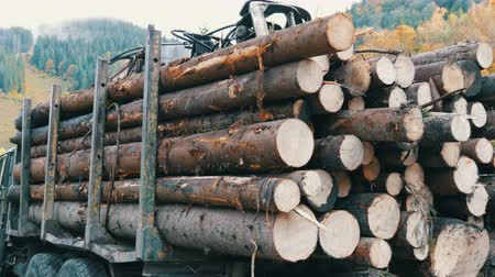 silvicultura : A large truck with a full body of freshly sawn wood. Tree trunks neatly in row. Transportation of timber on a truck on the mountain road. Industrial truck with trailer transports freshly sawn logs Vídeos
