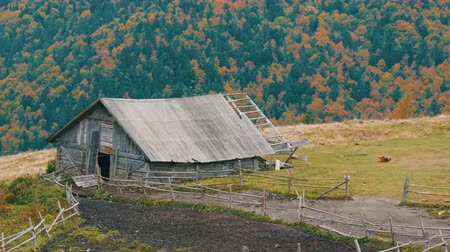 cercar : Old wooden abandoned wooden house for cattle in background of picturesque Carpathian mountains in autumn Stock Footage