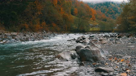 регионы : Quick, cold mountain stream Cheremosh in the Carpathian mountains on the background of rocky shore. Early autumn foggy morning in mountain village of Dzembronya Стоковые видеозаписи