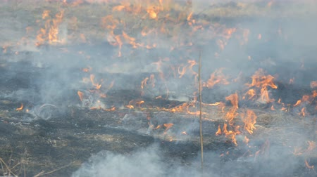 égés : View of terrible dangerous wild fire in the daytime in the field. Burning dry straw grass. A large area of nature is in flames.