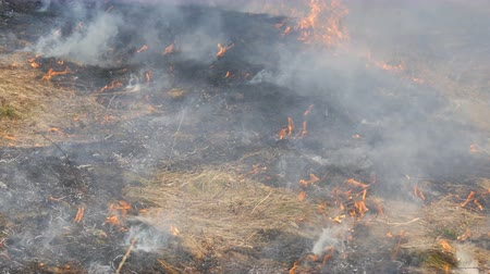 futótűz : View of terrible dangerous wild fire in the daytime in the field. Burning dry straw grass. A large area of nature is in flames.