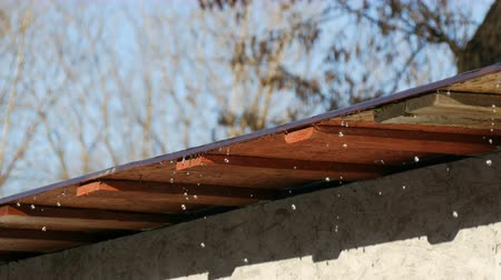 monção : Drops of water flow from the roof. Melting icicles under spring sun Vídeos