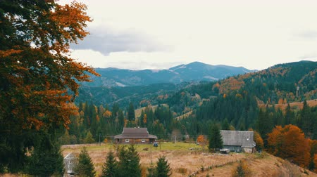 cam : Beautiful multi-colored foliage in the Carpathian mountains in early autumn in October. The natural beauty of some the oldest mountains in the world Stok Video