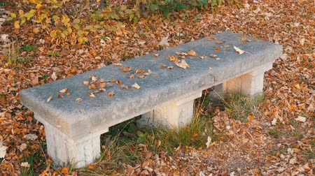 heg : Old vintage concrete bench in park  in Munich in autumn, surrounded by dry, fallen foliage Stockvideo