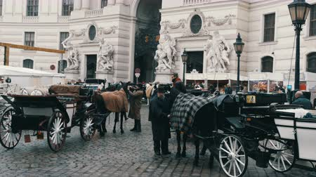hofburg : Vienna, Austria - December 19, 2019: Beautiful elegant dressed white horses. Traditional carriages of two horses on the old Michaelerplatz background of Hofburg Palace