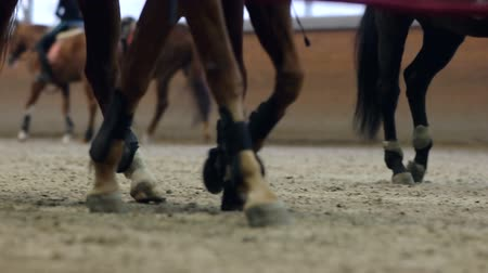 sáně : Close-up view on the hooves of horses running through a dusty field.