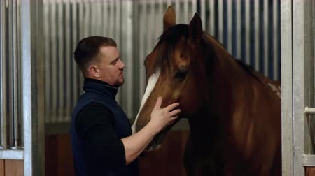 breeder : Close up portrait of a man feeding and caressing a horse. Young guy playing with brown horse in a stabled. Care and love for the animals.
