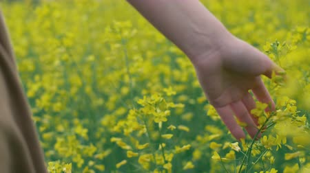 Female hand touches yellow flowers. Woman touching beautiful yellow flowers