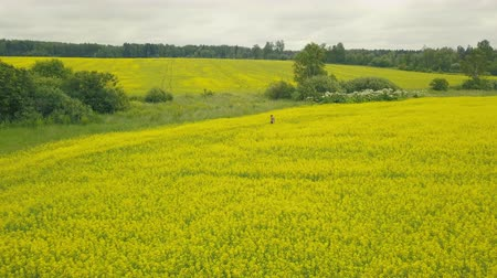 Drone view young woman walking in summer field. Country flowering field