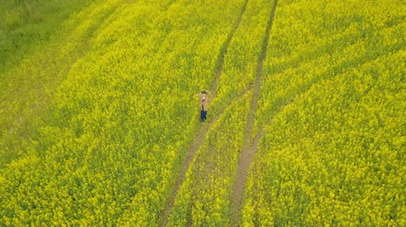 Sky view young woman walking in a flower field. Field with yellow flowers Stock mozgókép