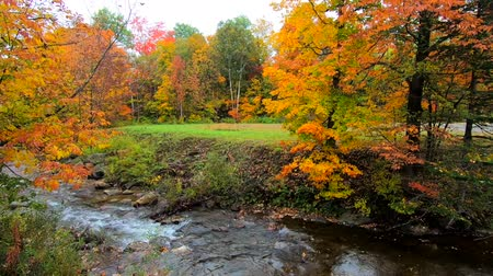 moribundo : Pan Across Stream Burbling Through Vibrant Trees During Fall Colors in Vermont. Vídeos