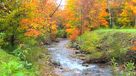 haldokló : Stream Burbling Through Vibrant Trees During Fall Colors in Vermont.