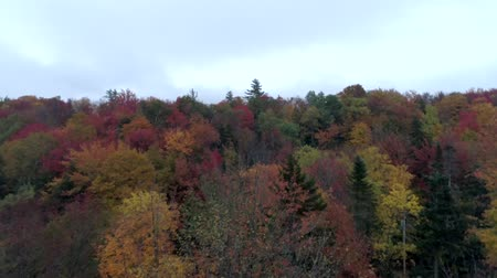 klon : Aerial Drone - Skim Treetops in Fall in Vermont.