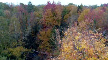 ölen : Aerial Drone - Fly Through Trees in Full Color While Others Are Bare in Fall in Vermont.