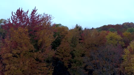 moribundo : Aerial Drone - Fly At Treetop Level in Fall in Vermont.