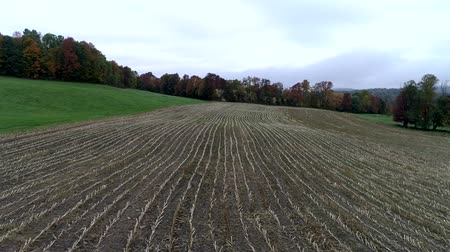 kukuřice : Aerial Drone - Fly Over Corn Field Freshly Harvested in Fall in Vermont.