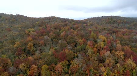 ölen : Aerial Drone - Scan Hillside Filled With Fall Color Trees in Vermont Stok Video
