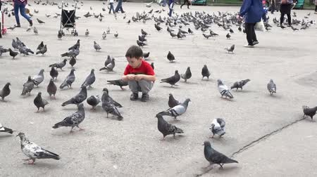 kleine meisjes : Almaty, Kazakhstan - 20170531 - Boy shares his food with pigeons in park