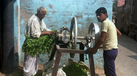 crush : Barsana, India - 20180225 -  Two Men Grind Greens For Dinner Stock Footage