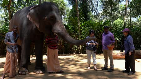 keeper : Cochin, India - 20180307 -  Two Tourists Feed Elephant