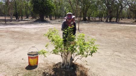 ogrodnik : Sukhothai, Thailand - 2019-03-06 - Woman Worker Waters Trees Using Buckets of Water. Wideo