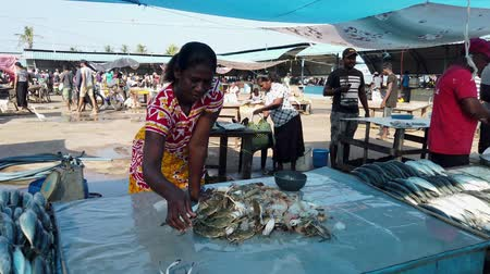 hentes : Nogombo, Sri Lanka- 2019-03-22 - Fish Vendor Organizes Pile of Crabs.