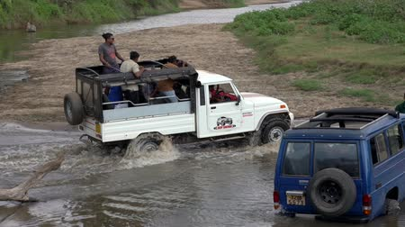 borowina : Minneriya National Park, Sri Lanka - 2019-03-23 - White Jeep Passes Truck Stuck in River.