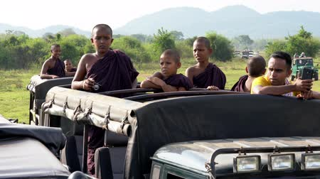 посетитель : Minneriya National Park, Sri Lanka - 2019-03-23 - Safari People 1 - Young Monks Waiting For Animals. Стоковые видеозаписи