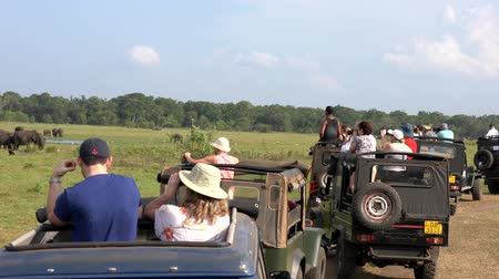 посетитель : Minneriya National Park, Sri Lanka - 2019-03-23 - Safari People 2 - Elephants are Watched by Line of Jeeps.