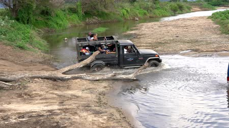 borowina : Minneriya National Park, Sri Lanka - 2019-03-23 - Green Jeep Passes Truck Stuck in River.