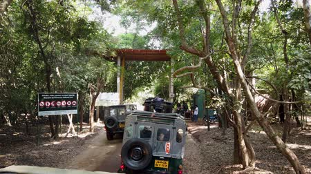 посетитель : Minneriya National Park, Sri Lanka - 2019-03-23 - Jeeps Line up to Enter Park.