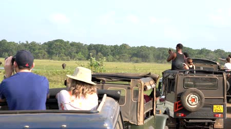 посетитель : Minneriya National Park, Sri Lanka - 2019-03-23 - Safari People 3 - Line of Jeeps Watches Elephants. Стоковые видеозаписи