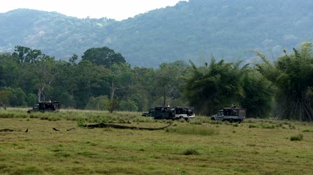 odejít : Minneriya National Park, Sri Lanka - 2019-03-23 - Safari People 7 - Line of Jeeps Leave at End of Day.