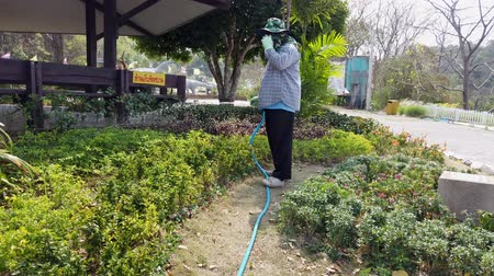 орошение : Phayao, Thailand - 2019-03-08 - Gardener Waters Plants While Talking on Phone. Стоковые видеозаписи